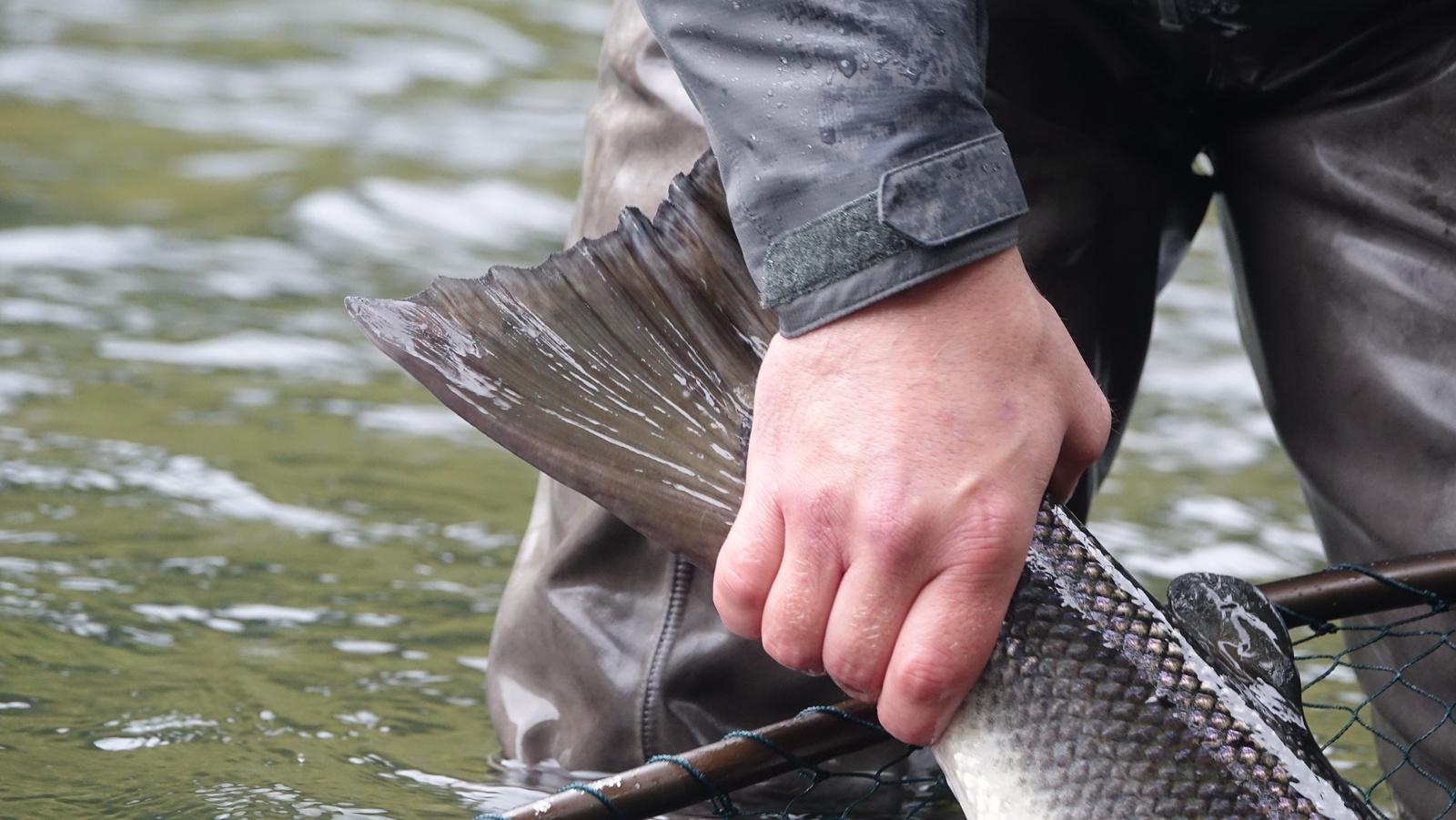 skittfiske